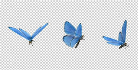 Design Your Home Realistic 3d Free by Flying Butterfly Blue Adonis By Videomagus Videohive