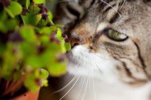 Piante Tossiche Per Gatti by Gatto E Piante Tossiche Quali Sono E Che Sintomi Provocano