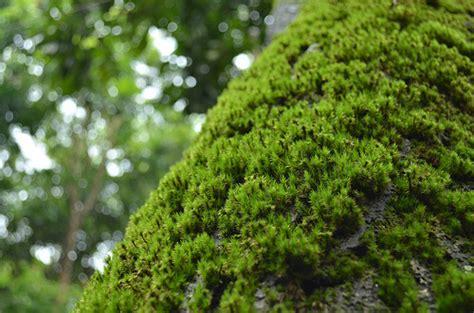 lumut perak tourist travel guide malayisia