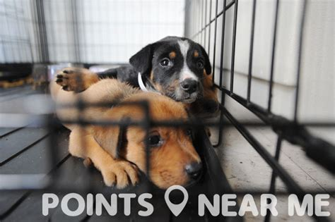 pound near me animal shelters near me points near me