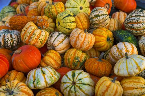 what color are pumpkins lots of colorful pumpkins many different pumpkins