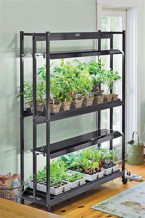 jump  spring  growing   herbs indoors