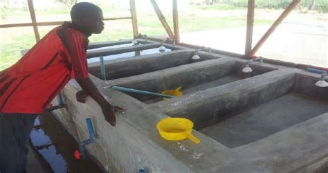 catfish hatchery layout we dare to hope sani bello foundation for youth