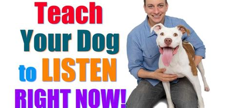 how to your to walk on a lead how to teach your to walk on leash petlvr archives
