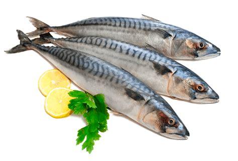 pesce azzurro come cucinarlo il pesce azzurro in due ricette di pellegrino artusi edo