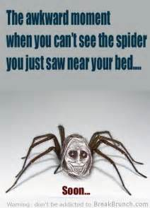 26 best spiders images on spiders stuff