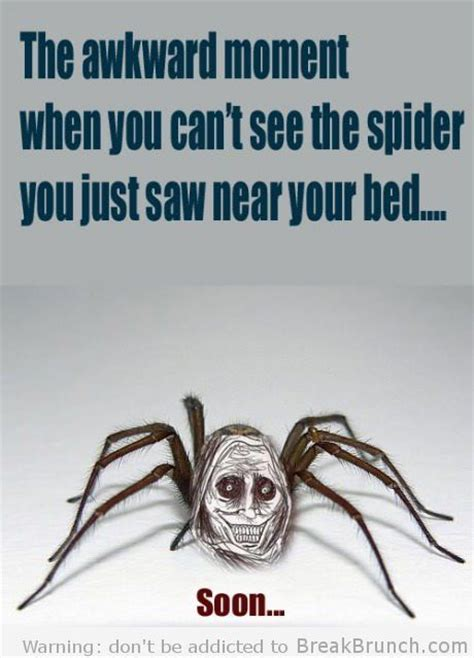 Scary Spider Meme - best 25 funny spider ideas on pinterest what is