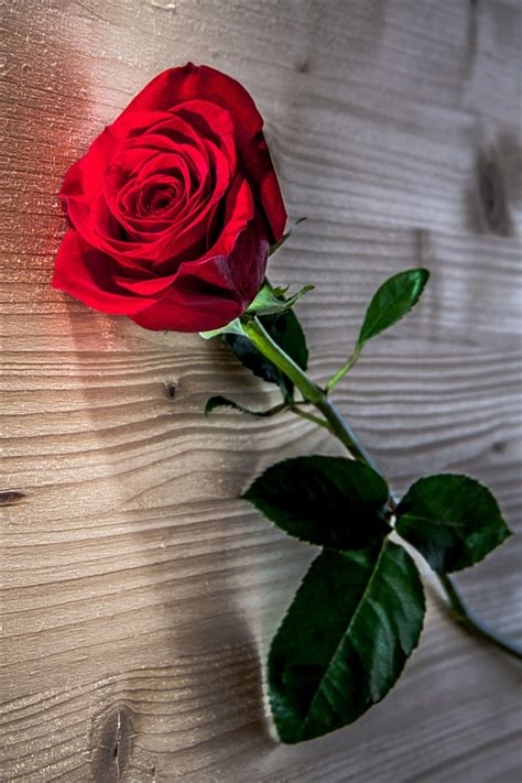 red rose flower wooden table iphone  gs