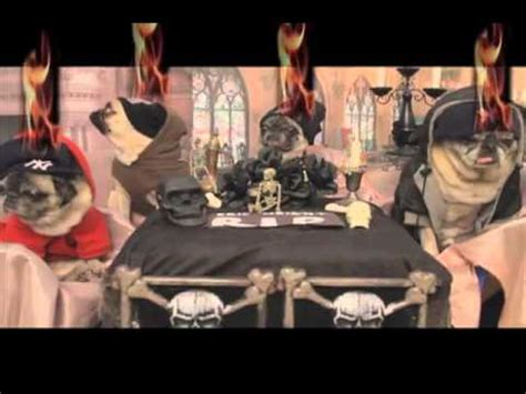 bone pugs n harmony bone pugz n harmony