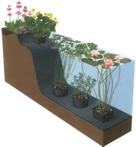 water garden and pond plants pots and baskets