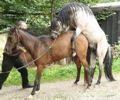 pferde decken lassen pferde decken lassen home image ideen