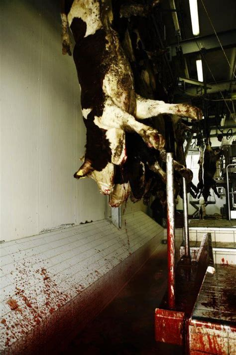 Slaughterhouse Glass House by 88 Best Images About If Only The Slaughter House Had Glass