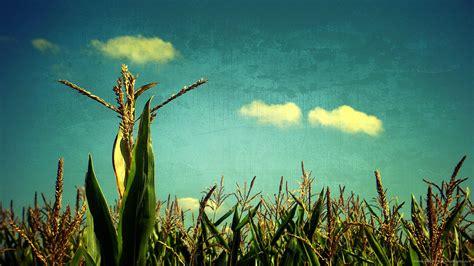 quotes  corn fields quotesgram