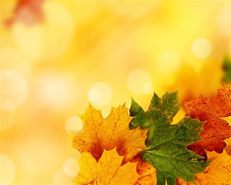 Yellow Autumn Backgrounds For Powerpoint Nature Ppt Templates Autumn Powerpoint Background