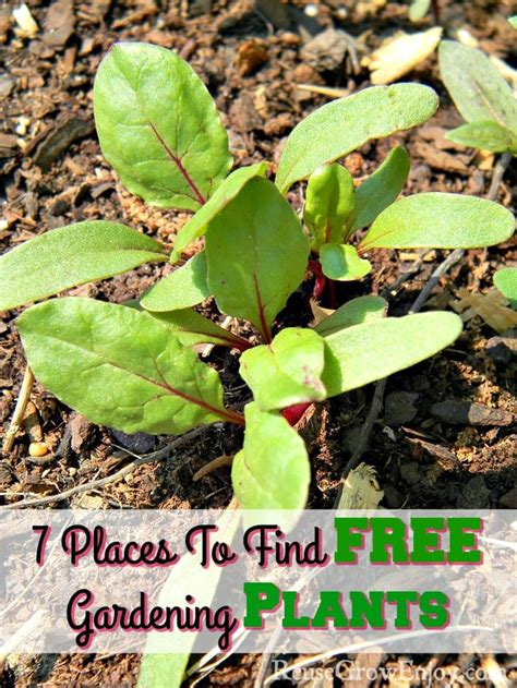 Best Place To Search For 7 Places To Find Free Gardening Plants Reuse Grow Enjoy