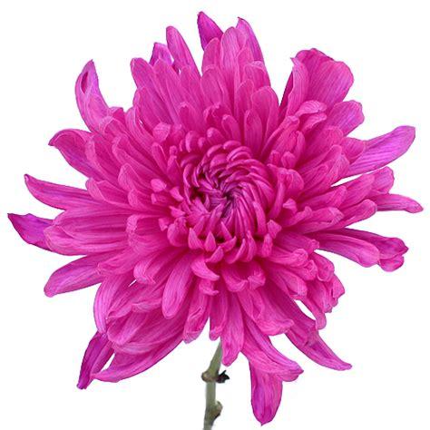 mum flower arrangement pink jpeg electric pink wedding flower