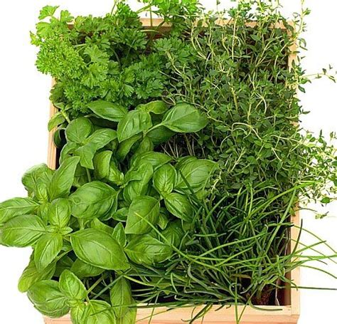 how to grow a herb garden in pots planting a herb garden tips www coolgarden me