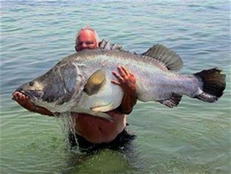 wann beißen welche fische angelreviere s 252 dfrankreich