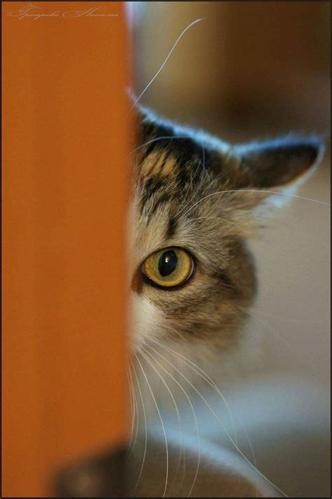 Peek A Boo you to see these 8 truly adorable kittens