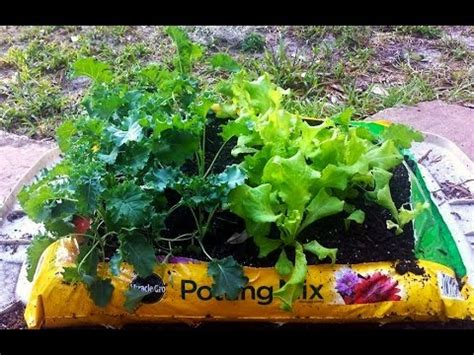 Urban Garden Project Growing Vegetables Out Of A Potting Potting Soil For Vegetable Garden