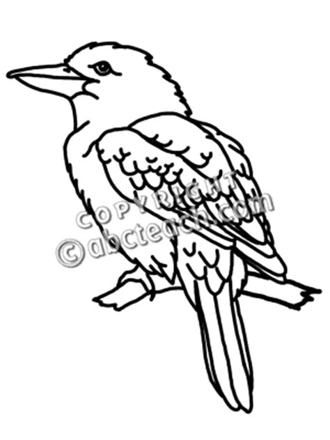 kookaburra coloring page free kookaburra clip art black and white kookaburro