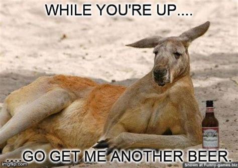 Funny Photos Memes - 45 most funny kangaroo meme photos and images