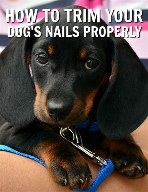 how to use nail clippers 300 best pets animals images on pet care care and pet products