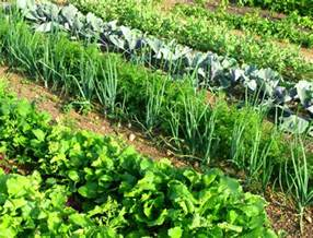 the best vegetables for your northeast garden with hd