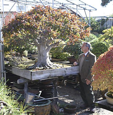 august 2013 valavanis bonsai blog page 2