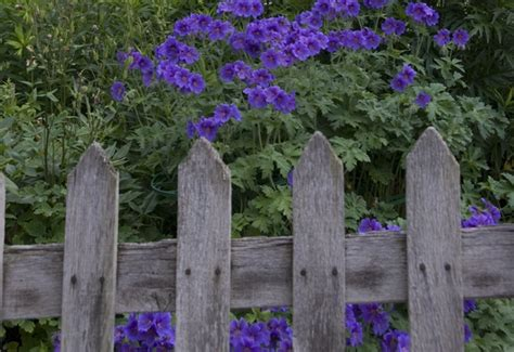 cottage garden fence cottage garden fences