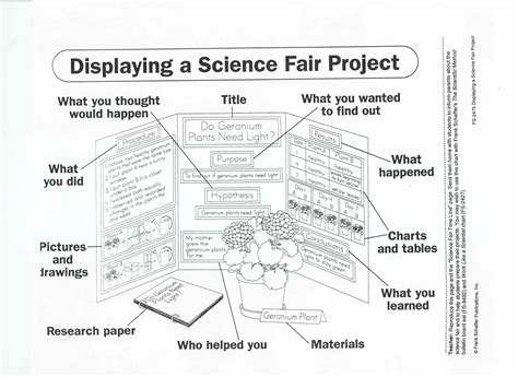 poster layout for science fair science fair project display board science pinterest