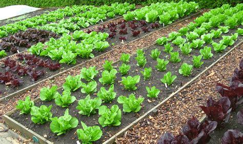 tips  organic vegetable gardening joy  garden