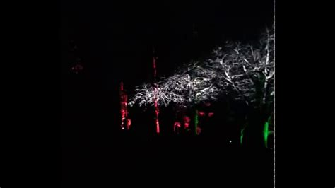 morton arboretum holiday lights holiday tree light show illumination at morton arboretum