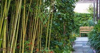 10 different types of bamboo diy gardening craft