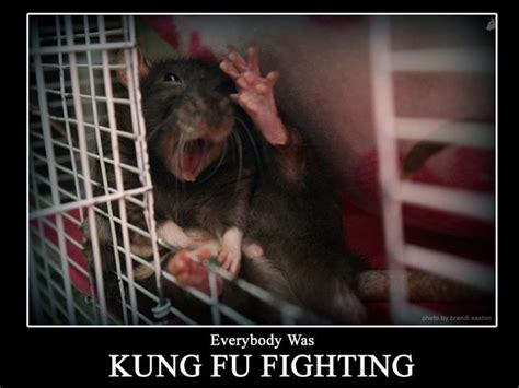 Everybody Was Kung Fu Fighting by 285 Best Images About I Rats