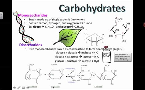 carbohydrates used for structure carbohydrates related keywords carbohydrates