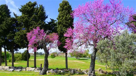 colors of spring file paestum colors of spring jpg wikimedia commons