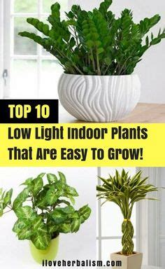 most difficult plants to grow 20 low light indoor plants that are easy to grow low