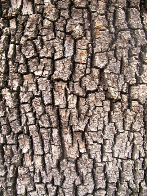 tree bark ii by oddgoo stock on deviantart