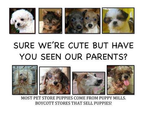 stop puppy mills shut puppy mills animal welfare