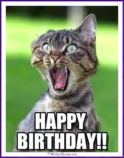 Cute Birthday Meme - best 25 cat happy birthday meme ideas on pinterest cat