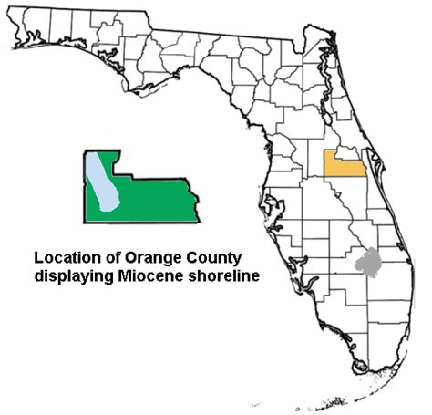 Warrant Search Orange County Florida Orange County Florida Paleontological