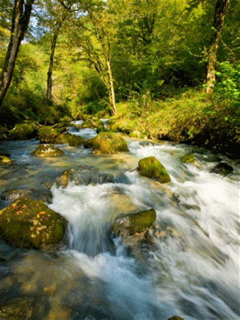 themes in the book river and the source verysoft mountain river animated