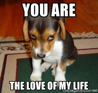 Love Of My Life Meme - you are the love of my life sad puppy meme generator