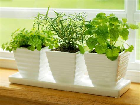 plant  kitchen herb garden hgtv