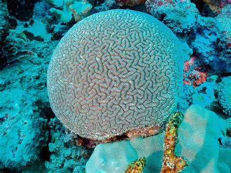 Round Island Kitchen by The 15 Most Beautiful Coral Reefs In The World