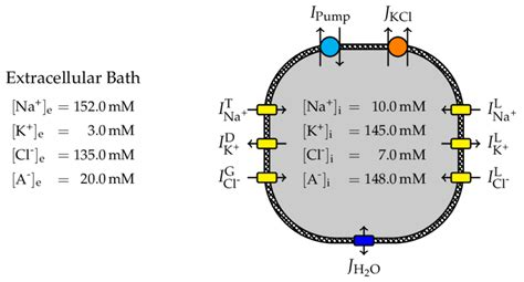 schematic model overview  typical ion