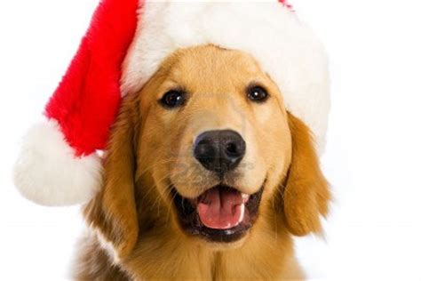 imagenes feliz navidad con perros 161 feliz navidad pr 243 spero a 241 o y felicidad