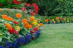 Garden Flowers Annuals Annual Plants Annual Flowers Annuals Winter Flowers Biennials Perennials