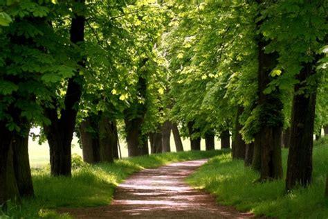 camino foto foto mural camino bosque bosques ref 8902614